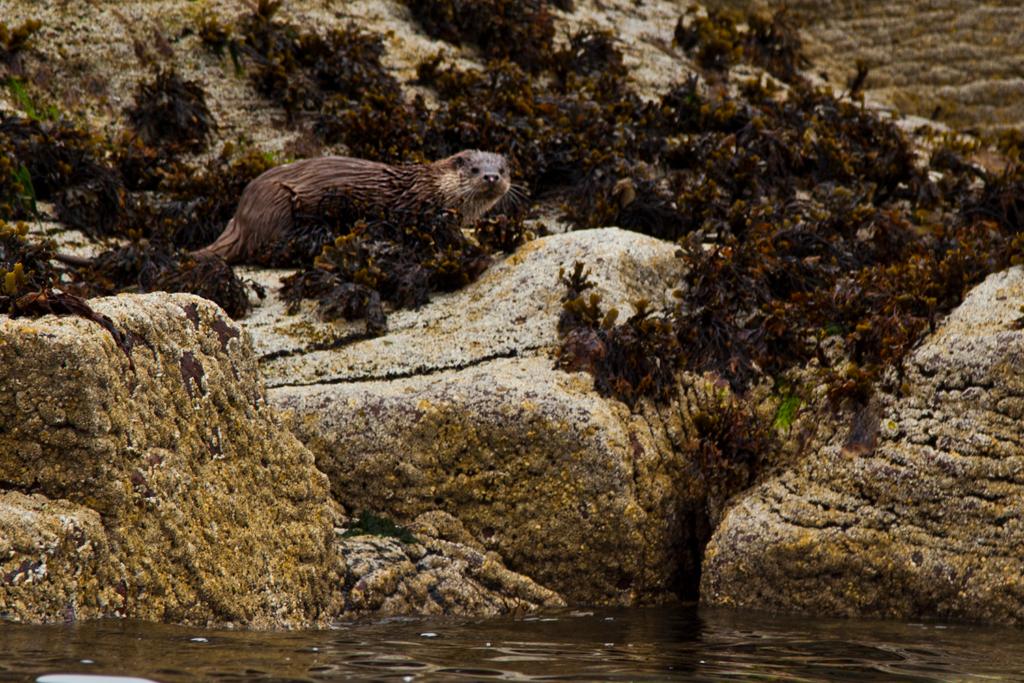 Kayak Summer Isles Otter
